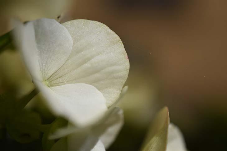 Nikon D5600 Sample Image © Mattia Bonavida