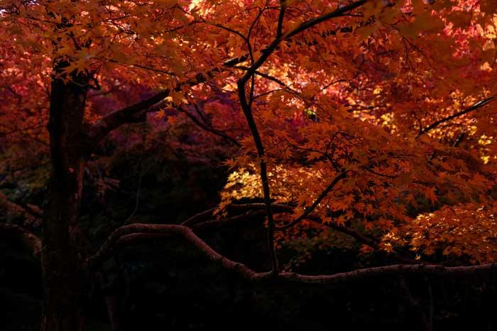 Fuji X100T Sample Images 3