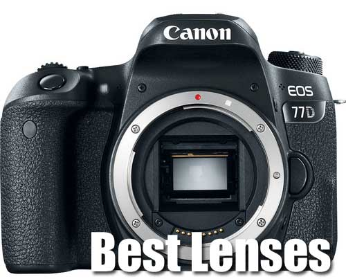 Canon 77D Best Lenses
