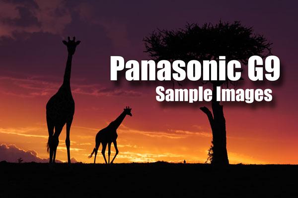 Panasonic G9 sample images